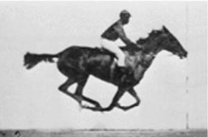 Horse_Still